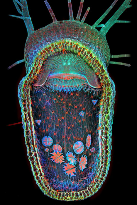 © Dr. Igor Siwanowicz/Olympus BioScapes Digital Imaging Competition