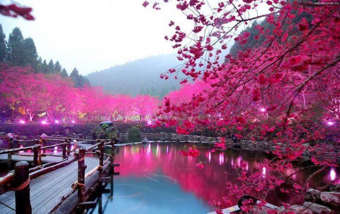 Cherry Blossom: Sakura, Tokyo