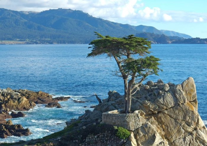 Lone Cypress in Monterey