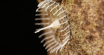 Unknown Artistic Insect Builds a White Picket Fence to Protect its Nest of Eggs