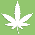 thecannabischannel.com
